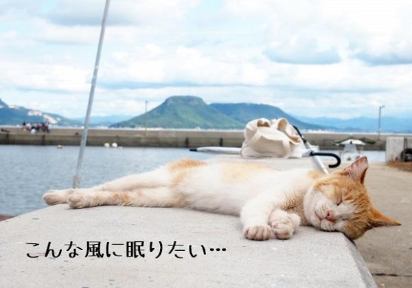 こんなふうに眠りたい